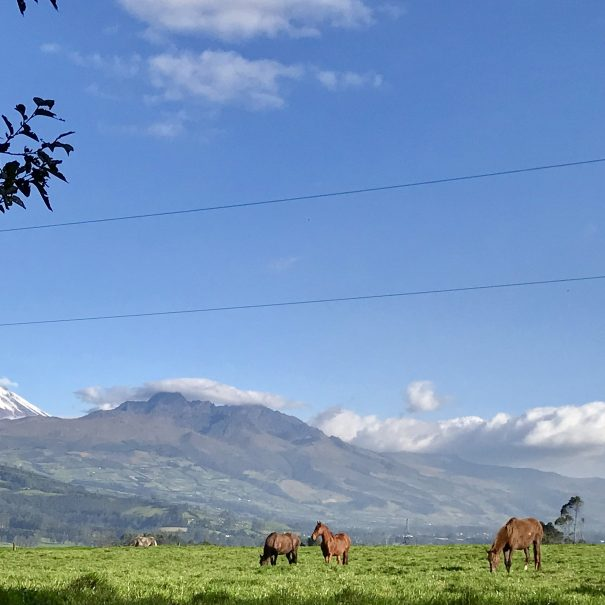 Cotopaxi Landscape